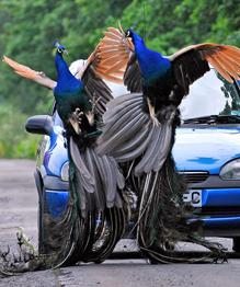 Самые надоедливые городские животные в мегаполисах всего мира — это голуби. А кто еще?