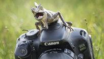Родео на жуке по-лягушачьи, папарацци-сморчок и испытание терпения крокодила - лучшие кадры самого необычного.