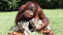 Вы думаете, только в мультиках разные животные дружат и играют друг с другом? В жизни такое тоже возможно…