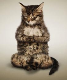 Многие асаны йоги названы: кошка, собачка, лягушка и прочие. Не значитли это, что йогу придумали звери, а человек лишь усовершенствовал методу.