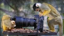 Техника в руках дикаря - это... Впрочем, даже не важно, что именно... А вот техника в лапках симпатичных животных - это всегда прикольная ситуация, да еще и забавный снимок в придачу!