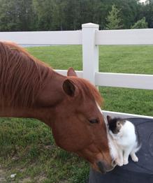 Кот по кличке Саппи и лошадь Дакота — влюбленная парочка. Несмотря на большую разницу в росте, наряду со многими другими различиями, они — лучшие друзья.