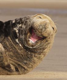Некий мыслитель древности изрек, что человек отличается от животного умением улыбаться. Позвольте в этом усомниться…