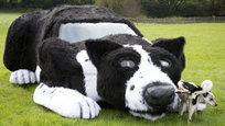 Если у вас есть автомобиль, но нет овчарки, то это дело легко исправить. Хуже, когда наоборот, потому что даже из самой большой собаки нельзя сделать самую маленькую машинку.