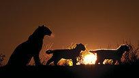 Ночная жизнь пустыни Калахари
