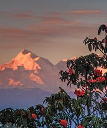 Для многих Индия ассоциируется с шумными перенаселенными городами, нищетой и антисанитарией. Мумбааи, Дели,  Миллионер из трущоб . Однако в каждой стране есть уголки, попадая в которые, понимаешь: вот оно — настоящее. Фотограф Нелима Валанги (Neelima Vallangi) открывает невероятные образы Индии: умопомрачительные леса, острова и заснеженные Гималаи, вдали от шумных мегаполисов Индии.