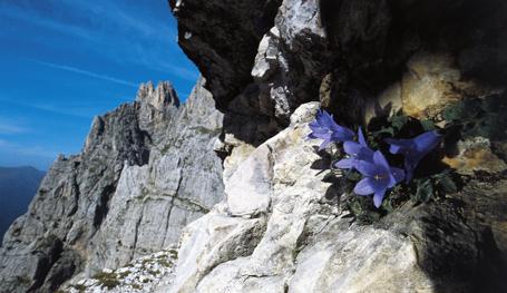 Удивительные альпийские пейзажи чаще вызывают мысли о Швейцарии. Однако Италия также может похвастаться уникальной природой Доломитовых Альп.