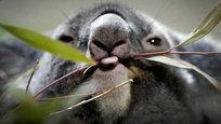 В Китае обрушилось жилое девятиэтажное здание, у берегов Санта-Барбары разлилась нефть, а в Сингапуре люди радуются мидведям-коала, которых приевезли пожить в местный зоопарк.