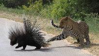 Животные приколы