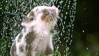Лето 2015 года. В Европе царит аномальная жара. В первую неделю июля на юго-западе Франции температура будет достигать 40 градусов. Двадцать шесть департаментов ввели оранжевый — предпоследний — уровень опасности. Знойное лето пришло и в другие страны Западной Европы. Страдает все живое…