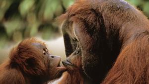 Ежегодно 6 июля отмечается Всемирный день поцелуя — официальный международный праздник. World Kiss Day, или World Kissing Day, впервые появился в Великобритании в конце XIX столетия. Статус международного получил век спустя.