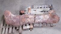 В Аргентине, на холме El Sombrero, найдены кости самого крупного сухопутного динозавра, жившего 100-95 миллионов лет назад. Новая разновидность титанозавра обитала на Земле в последний меловой период. Это существо достигало 40 метров в длину и приблизительно 20 метров в высоту, что равно высоте семиэтажного здания. Вес приблизительно 77 тонн, иначе говоря, эквивалентен весу 14 взрослых африканских слонов.