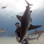 Естьли способ укротить опасную акулу, сделать ее ласковой, доброй и совсем неопасной. Эксперт по акулам, дайвер Рикардо Авогадри нашел подход к акулам и сделал их практически ручными. Какже ему удалось достичь этого?