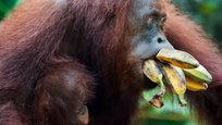 Рейтинг десяти самых умных животных составляли люди, IQ которыхбы сами животные шутки ради поместилибы на одиннадцатое место. Просто так, чтобы некоторые двуногие приматы не слишком зазнавались.