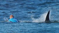 Во время турнира по серфингу, который проходил в ЮАР, чемпион мира австралиец Майкл Фэннинг подвергся нападению акулы. Происходящее транслировалось в прямом эфире.