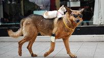 Живут как кошка с собакой. Это утверждение уже очень давно неправда. Удивительные истории о дружбе и преданности животных в фотографиях.