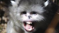 В наше время на планете Земля еще остаются животные, которые могут удивить кого угодно и своим происхождением, и образом жизни, и внешним видом. Несмотря на многотысячелетнюю историю изучения человечеством животного мира, некоторые виды обитателей планеты мы открываем только сейчас, в последние годы.