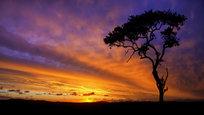 Эти снимки сделаны 47-летним фотографом Марио Морено (Mario Moreno) во время путешествий по своей родине Южной Африке, а также по Ботсване и Танзании. Свои замечательные фотографии африканской фауны, от гигантских жирафов и слонов до миниатюрных цапель и богомолов, мастер делает на рассвете и на закате. Здесь мы представили небольшую часть работ из коллекции Марио, снятых в старейшем национальном парке ЮАР — Национальном парке Крюгер.