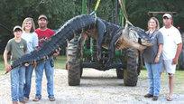 Семья из штата Алабама поймала самого крупного аллигатора за всю историю охоты на рептилий в штате, а возможно, и в мире.
