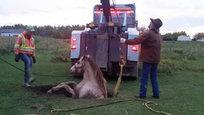 Что только не творится в мире животных. Сегодня в нашем фоторепортажи лошадь Маргаритка в яме, коты, делающие селфи, и протезы для слонов от Миранды Керр.