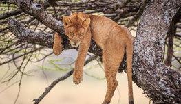 Куда животным деться от свои людских привычек? Они тоже любят удобно спать, вкусно есть и все красивое… Поэтому фотографируем и смотрим!