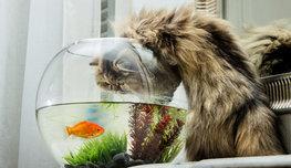 Кошкам легче и рыбку поймать, и квартиру обокрасть, и показ мод организовать… Почему? Просто посмотрите на них!