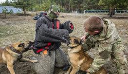 Собака бывает кусачей не только от жизни собачей, а по долгу службы. При этом грозная для врагов, она остается преданным другом для своих.