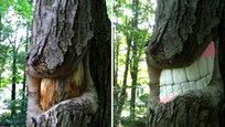 Робот-автостопщик, чай в шоколаде и улыбающееся дерево