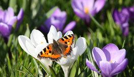 Цветами принято любоваться, приятно вдыхать их аромат, но не стоит забывать, что за красивой внешностью и тончайшим запахом может скрываться смертельная опасность для здоровья, а порой и для жизни человека.