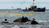 Нацрыбресурс: российской рыбе — российский порт