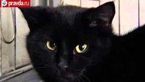 Кот из Харькова устроил себе пир на мясокомбинате