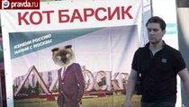 Пушистый кандидат: Кот Барсик баллотируется в президенты