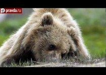 100 секунд: Медведь съел рыбака. В Москве прикрыли ТВ