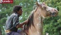 Лучший заклинатель лошадей в мире