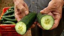 """""""Огурец раздора"""": насколько опасны импортные овощи?"""