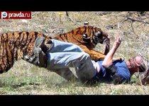 Опасная дружба с тигром