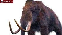Ученые возродят мамонтов?