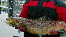 Рыбная отрасль - важный элемент продовольственной безопасности России