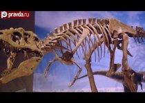 В США нашли предка тираннозавра