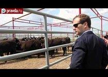 Медведев против импортного мяса