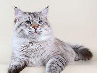 Кто подставил кота Дорофея?