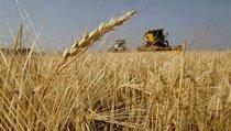 Сельхозперепись-2016: посчитали – и что дальше?