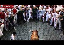 Бег с быками: взять смерть за рога