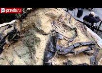 Последний бой динозавров уйдет с молотка