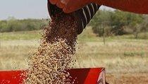 Михаил Орлов: Экспорт зерна — не повод для гордости