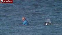 Серфер отбился от акулы в прямом эфире