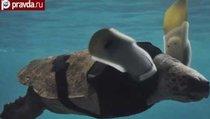 В Японии черепахе поставили протезы