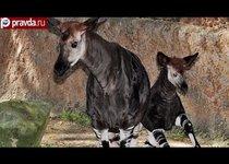 Новый вид животных на грани вымирания