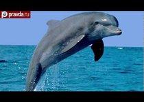 Массовая гибель дельфинов