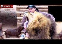 Лев и такса: любовь по дружбе